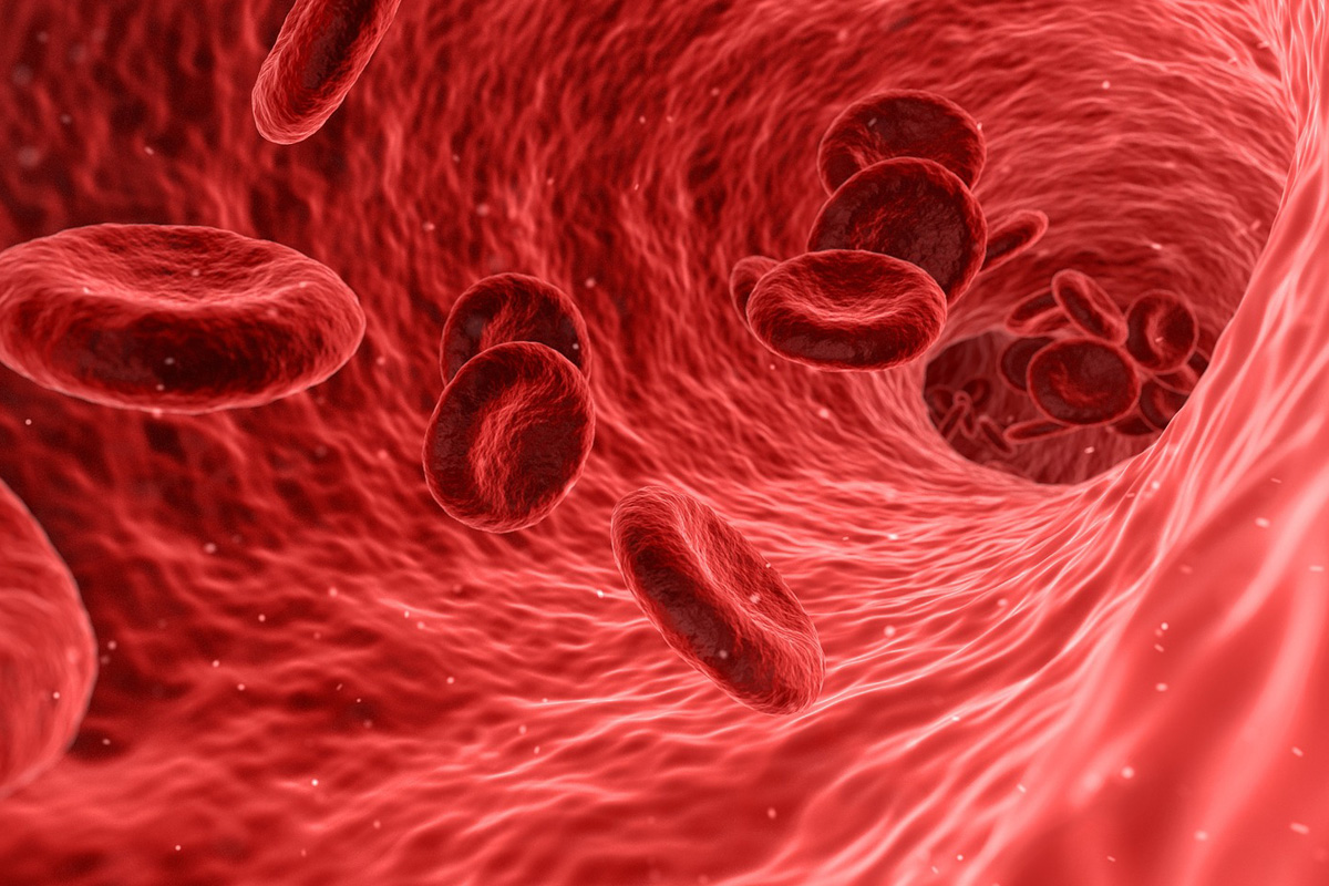 Does PRP Work for Chronic Tendonitis - visual graphic of microscopic view of blood cells