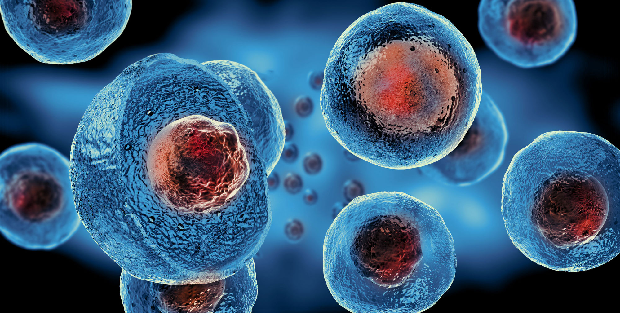 Stem Cell Therapies - illustration of cells