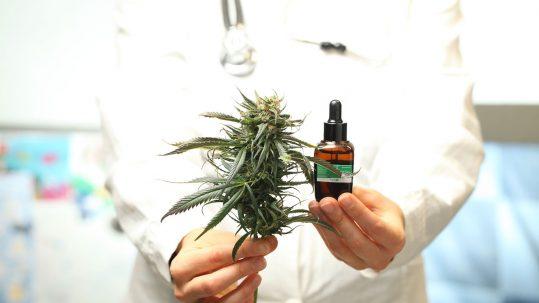 doctor holding cbd & marijuana
